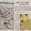 朝日新聞(2005.10.25 掲載)