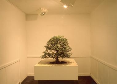 木もれ陽の模型