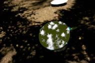 星の木もれ陽プロジェクト4