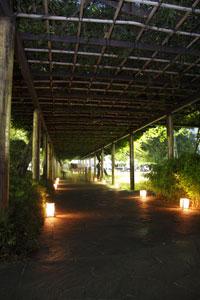 幻想的な回廊