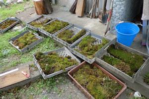 木村さんの家の庭や周りで採集された植物達。木村家の庭らしくするために、小石なども用意された。