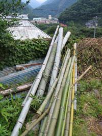 コップや箸を作るために切り出してきた竹